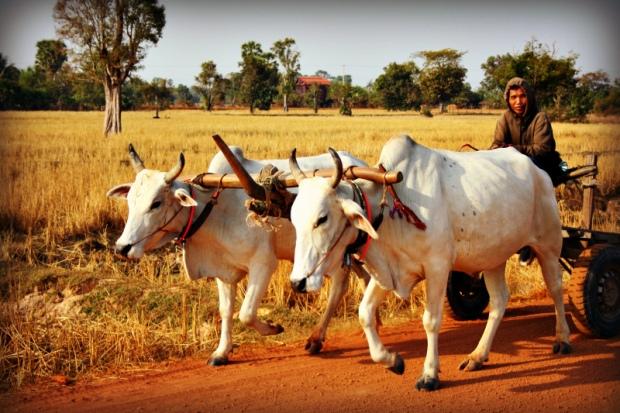 Cambodian transportation