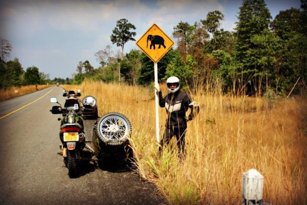 Attention - elephants crossing