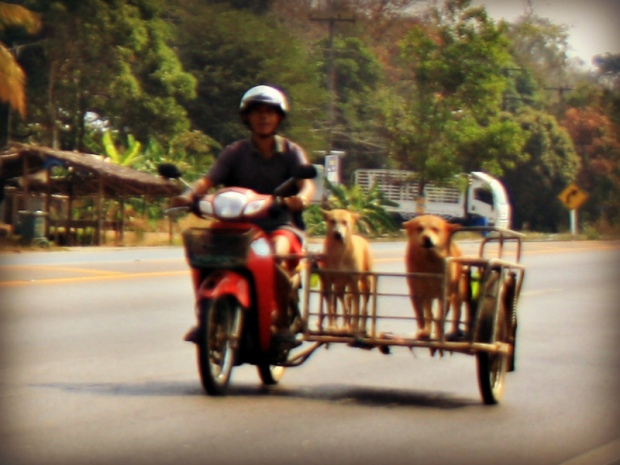 A sidecarist and his passengers in Thailand