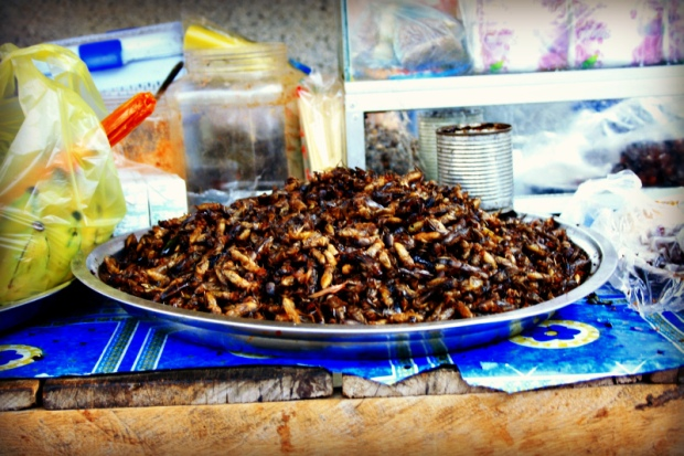 A snack of fried insects in the monastry next to Battambang