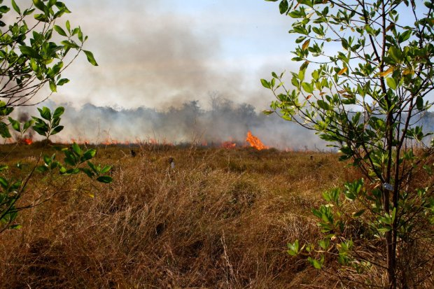 Slah-and-burn agriculture