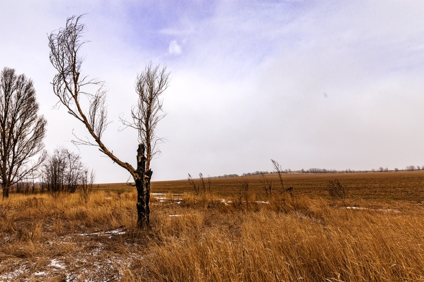 Dead Tree January