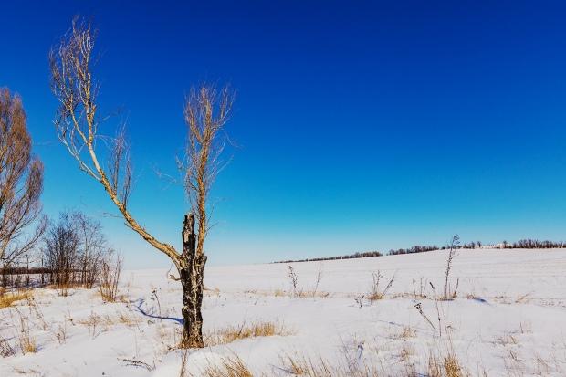 Dead Tree February