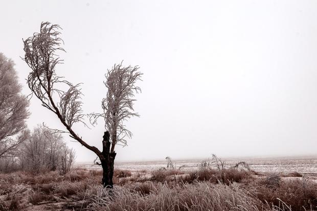 Dead Tree December