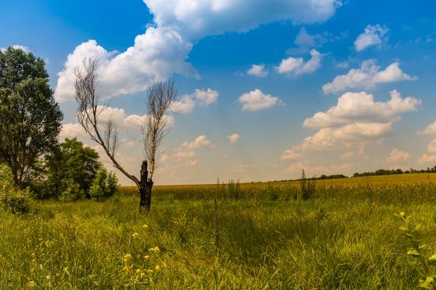 Dead Tree (June)