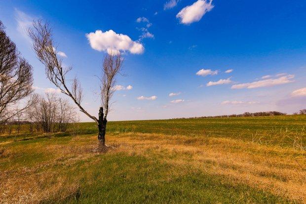 dead_tree_april16