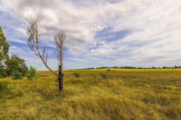 Dead Tree in August