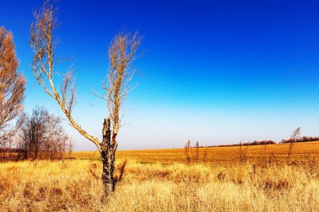 Dead Tree in November