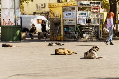 Street dogs at Bukia Garden in the center of Tbilisi