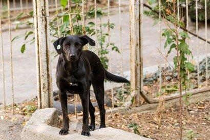 One of the community dogs in Saburtalo