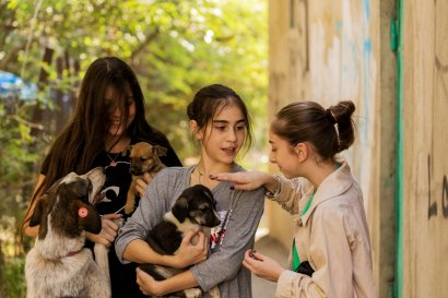 A group of girls care about the community dogs and street dogs in Saburtalo