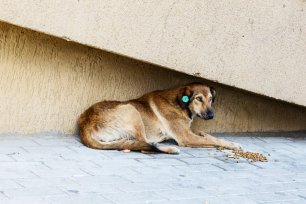 One of the community dogs in Gldani