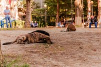 Peaceful coexistence - community dogs and people of Gldani