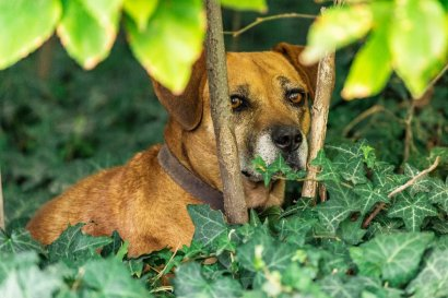 A street dog hidden in bushes at Hippodrome Park