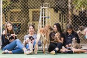 A groupd of girls care about the community dogs and street dogs in Saburtalo