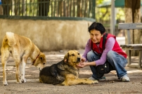 Tamar with Lilka (ear marked) and her own dog, a Georgian lady caring about community dogs in Vake Park
