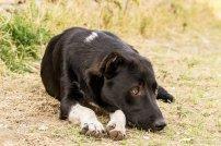 Street dog with cut ears at Hippodrome Park