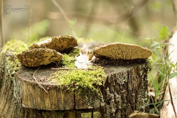 Fungi on Wood