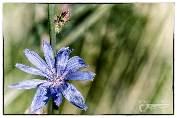 Blue - I love blue