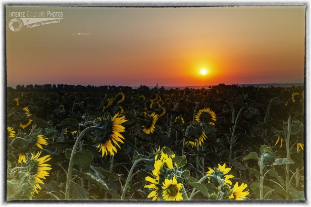 Sunrise Popasna